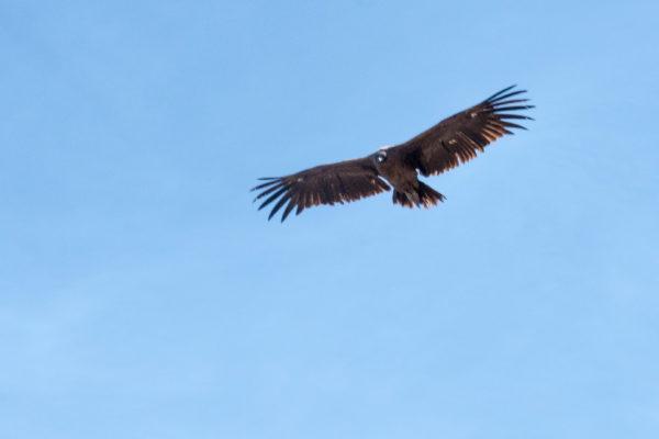 Croix du Condor - Pérou