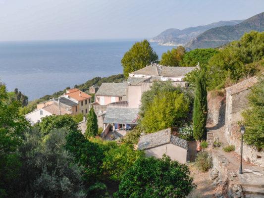 Pino - Corse