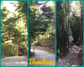 Forêt de Bambous de Damyang