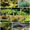 Napier – Jardin botanique