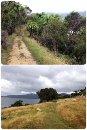 Picton – Queen Charlotte Track